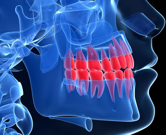 3d rendered illustration - teeth